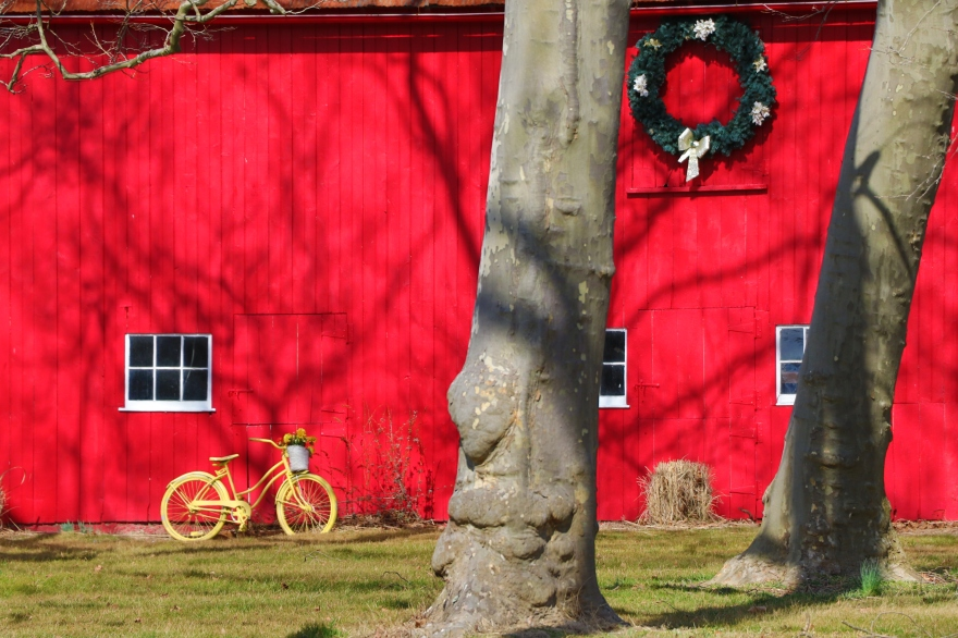 Yellow Bike, Red Barn