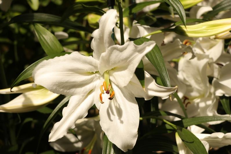 Longwood Gardens, Orchid Extravaganza