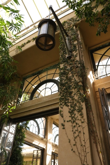 Creeping Vines, Longwood Gardens, Orchid Extravaganza